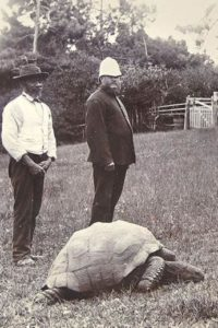"A picture that is ""believed to be"" Jonathan. Or it could be, ya know, any other tortoise who has ever lived."